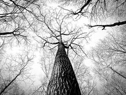 Black and white photo of a tree with branches