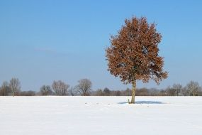 winter snow tree individually