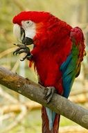 big colorful parrot on a branch