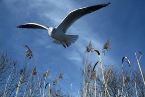 seagull flying in sky