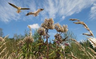 birds flying over a wild meadow