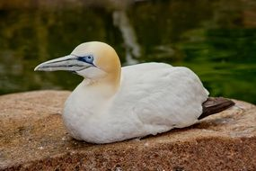 white bird sitting on stone near water