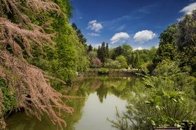 blooming trees in beautiful park at pond, turkey, istanbul
