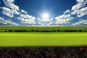 green summer landscape