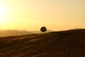 lonely tree landscape of Umbria
