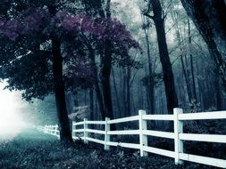 white fence in the forest at twilight