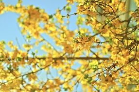bright yellow tree branch