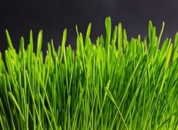close up green grass