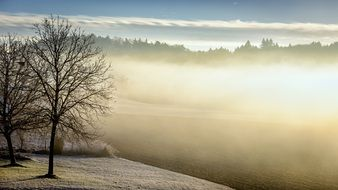 fog in winter morning bared trees view
