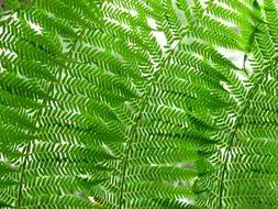 bright foliage of fern