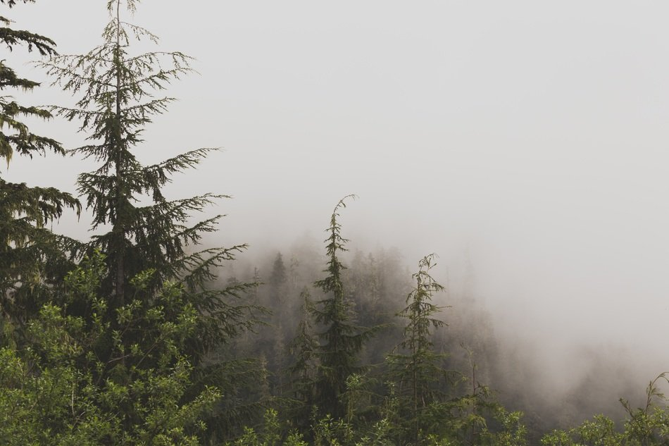 evergreen forest in mountains