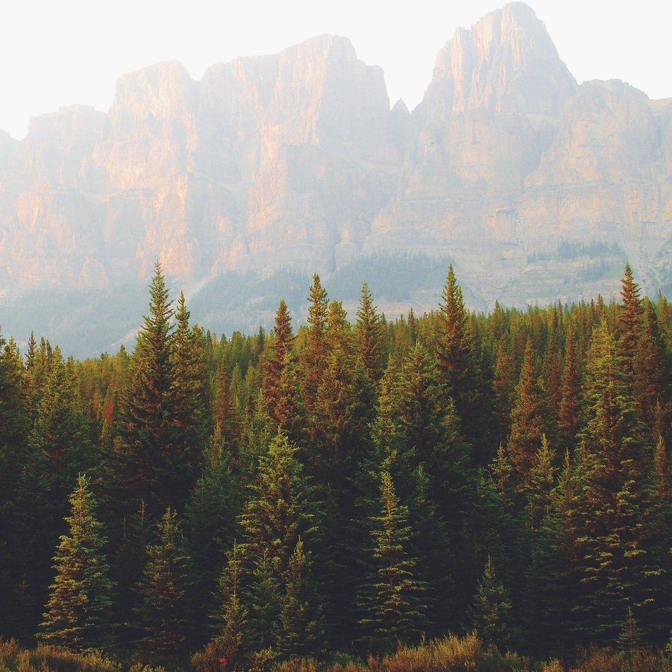 mountains and wild forest