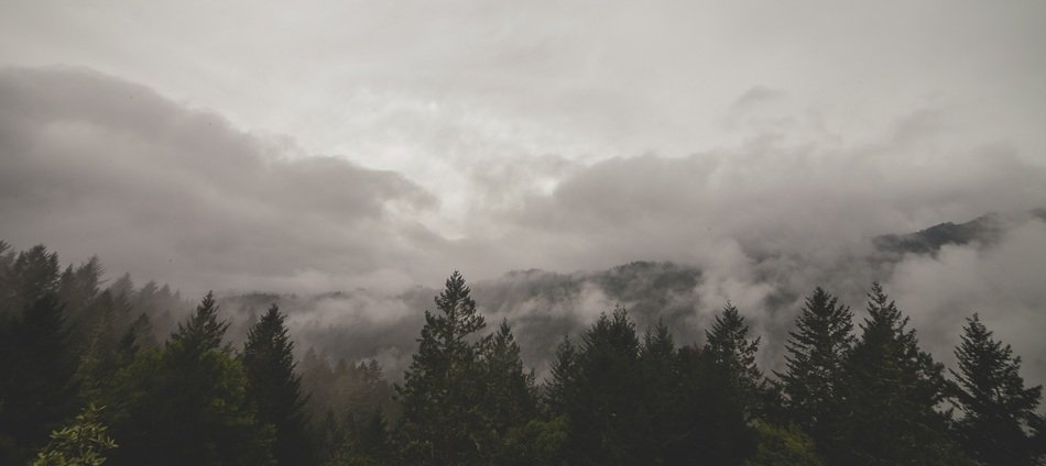 dense fog over the mountain spruce forest
