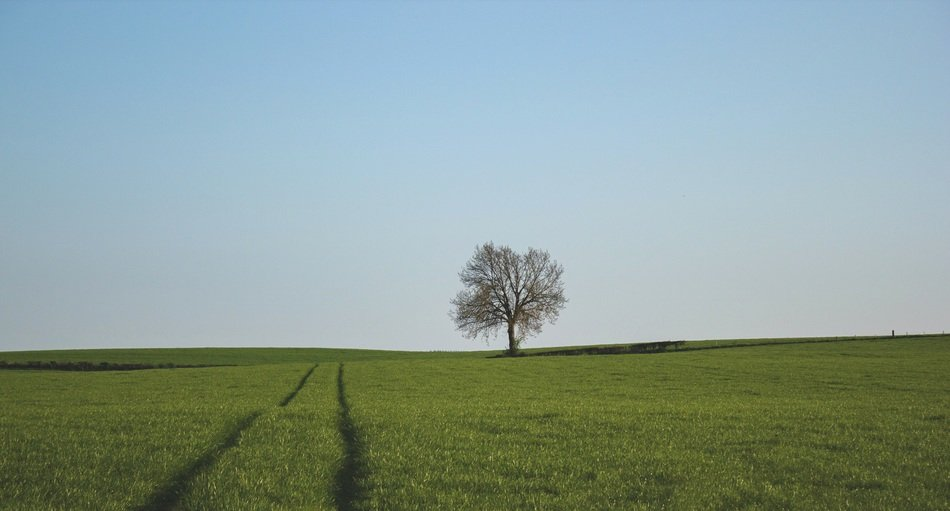 landscape with lonely tree in field