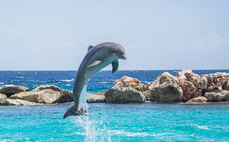 Baby dolphin jumping