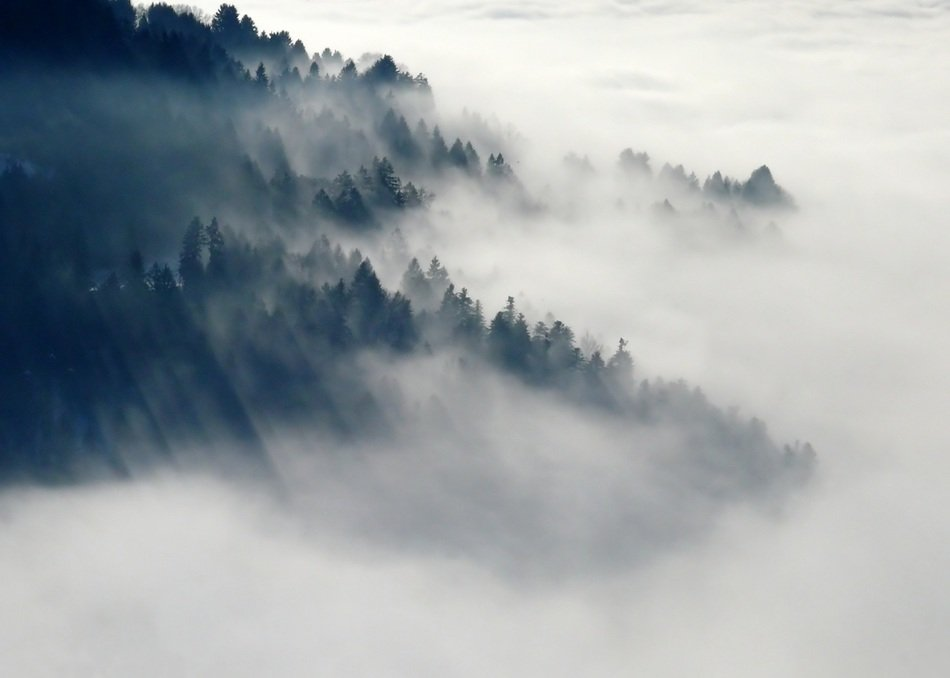 panoramic view of dense fog over the forest