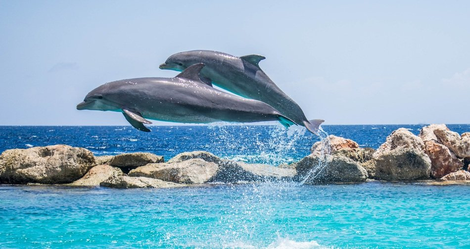jumping two dolphins above the water