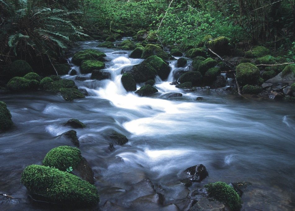 Mountain stream among picturesque landscape