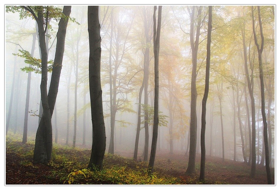 fog in dense forest