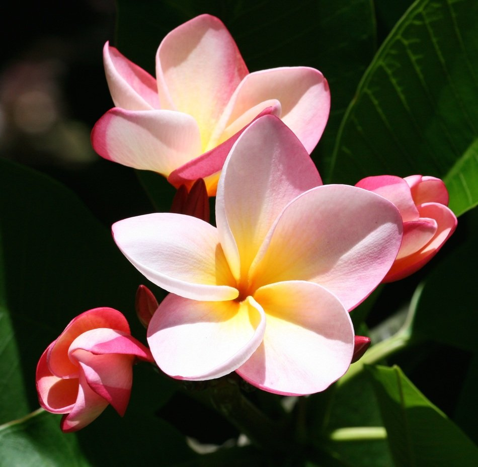 beautiful tender exotic flower
