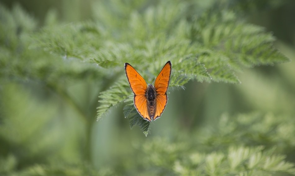 orange butterfly flower nature green