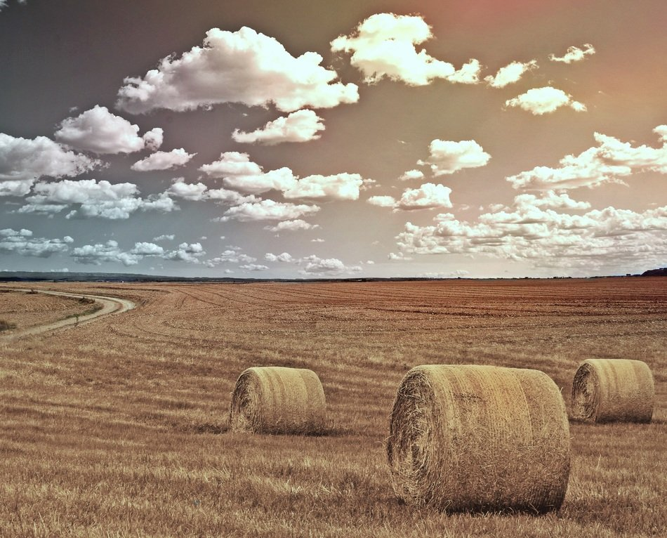 Straw bales on the yellow field