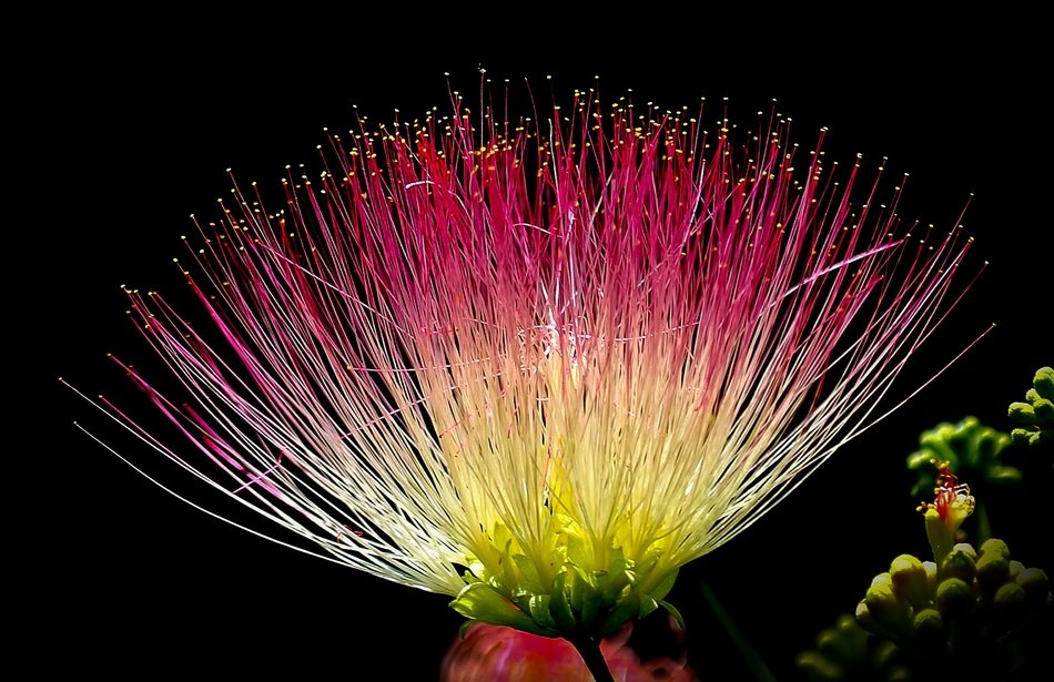 flower exotic colorful