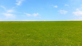 green grass in the meadow under blue sky