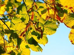 delightful sunny colorful leaves