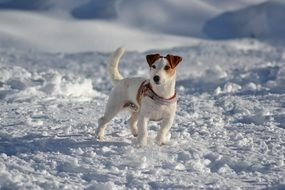 dog stands in the snow