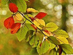 green and red leaves on a tree