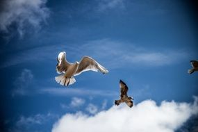 Gulls on a background of blue sky with white clouds