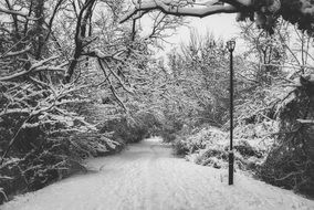 snowy path in park