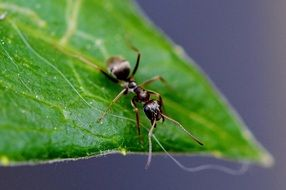 ant at leaf