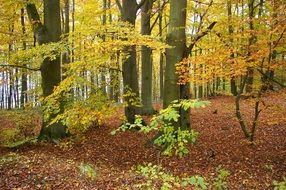 trees with yellow and green leaves in the autumn forest