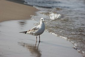 seagull on the baltic sea beach