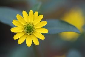 yellow flower on blurry background