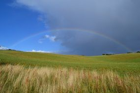 rainbow in the meadow