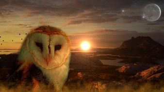 owl and setting sun