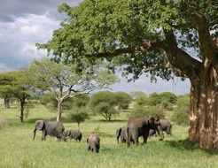 landscape of the elephants in Tanzania