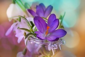 Spring flowers in a vase on a blurred background