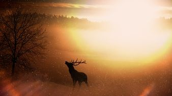 Deer in sunset forest