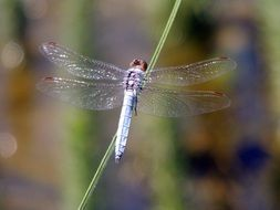 delightful dragonfly insect