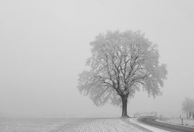 tree winter individually landscape