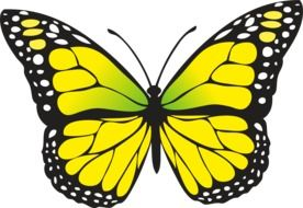 Yellow butterfly draft