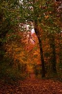 Dark orange forest autumn leaves