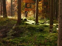 sunny forest in golden autumn