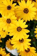 bright yellow flowers