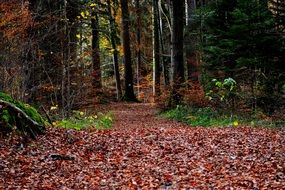 forest leaves path autumn
