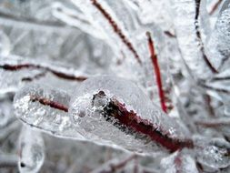 branches covered with ice, frost damage